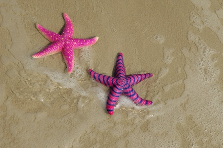two colorful seastars sitting on beach photo