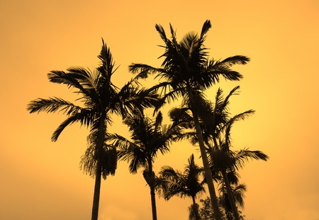 palm with sunset photo