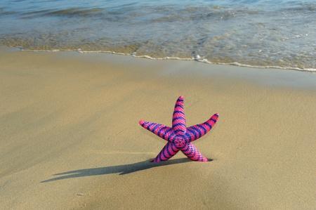 beached: seastar sitting on beach