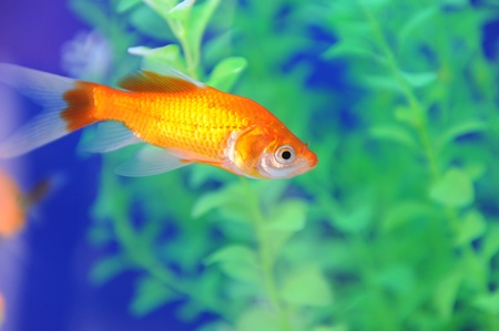 Tropical fish in an aquarium whit water on background Stock Photo - 12084172