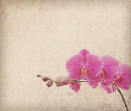 purple orchid: moth orchid design in grunge and retro style  Stock Photo