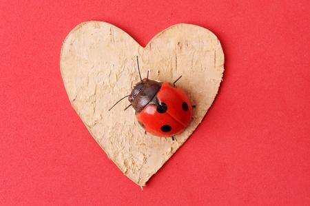 heart with ladybug  photo