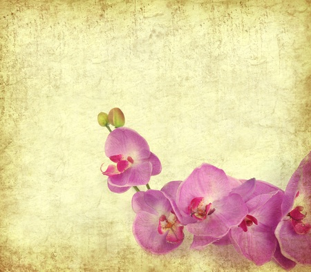 paper background with purple orchid   photo