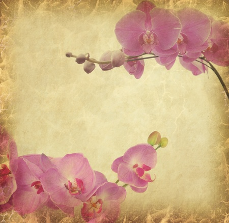 vintage wallpaper background with orchid   photo