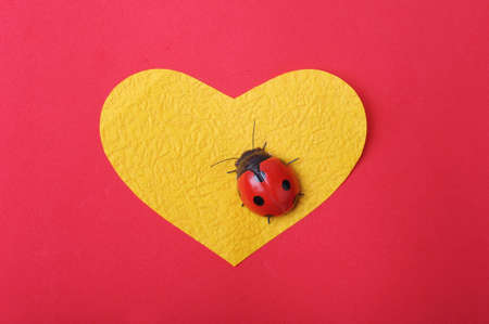 heart with ladybug photo
