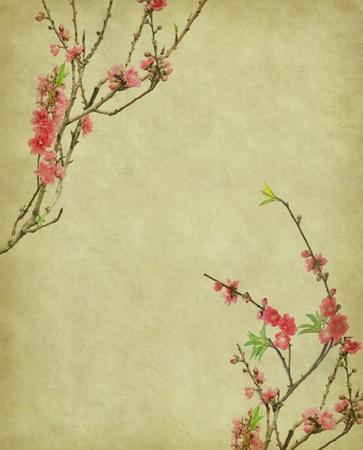 Old antique vintage paper background Stock Photo - 12767812