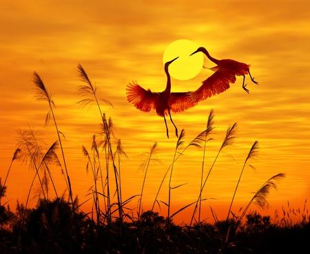 bullrush: bulrushes against sunlight over sky background in sunset with a flighting bird