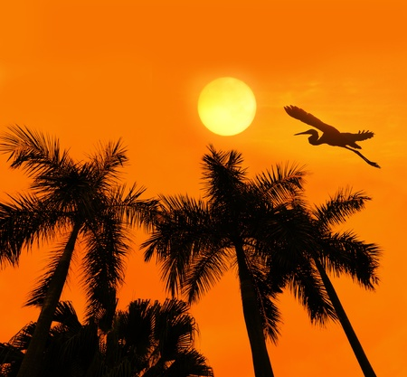 Palm tree silhouette on paradise sunset photo