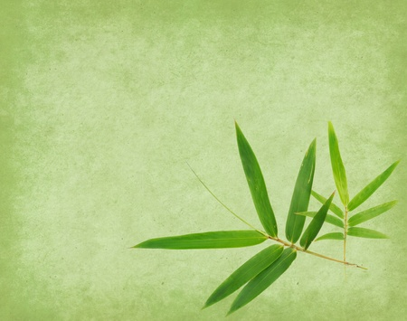 lucky bamboo: Grungy Background old paper with bamboo branches Stock Photo