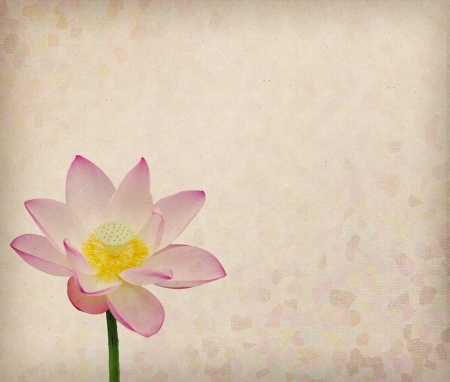pink wall paper: lotus with set of abstract painted background