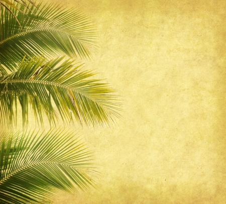 palm with set of abstract painted background photo
