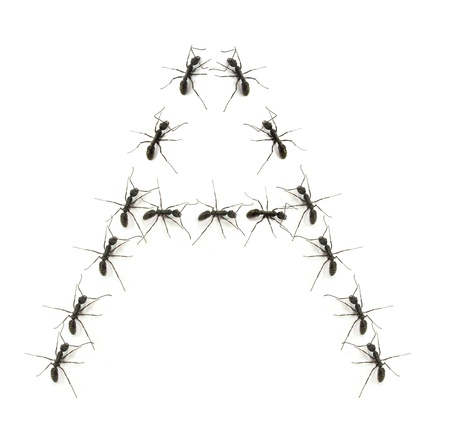 alphabet letters spelled by ant in line photo