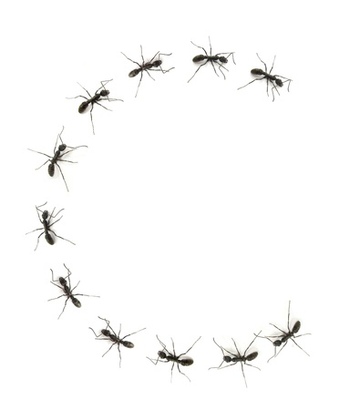 alphabet letters spelled by ant in line Stock Photo - 14082351