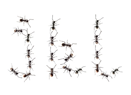 A line of worker ants marching to alphabet letters destination. photo