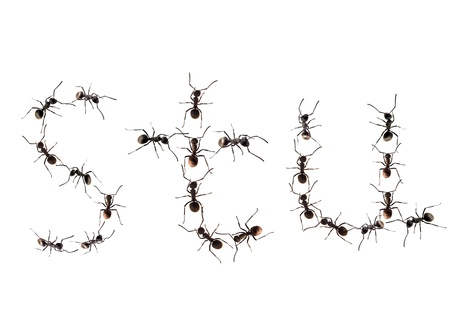 unity small flower: A line of worker ants marching to alphabet letters destination.