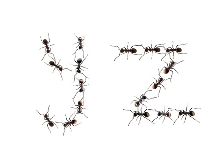 unity small flower: A line of worker ants marching to alphabet letters destination