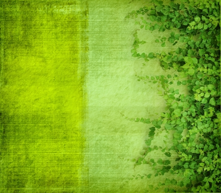 green ivy on old grunge antique paper texture photo