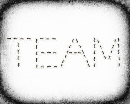 teambuilding: ants assembled to spell the word Team Stock Photo