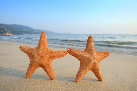 two animals: two starfish sitting on beach