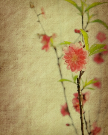 Spring peach blossom on Old antique vintage paper background Stock Photo - 14342039