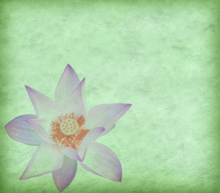 Water Lily on grunge textured background Stock Photo - 14447985