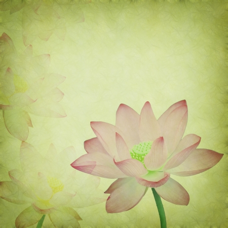 Water Lily on grunge textured background Stock Photo - 14447920