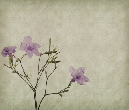 purple flower on Old antique vintage paper background photo