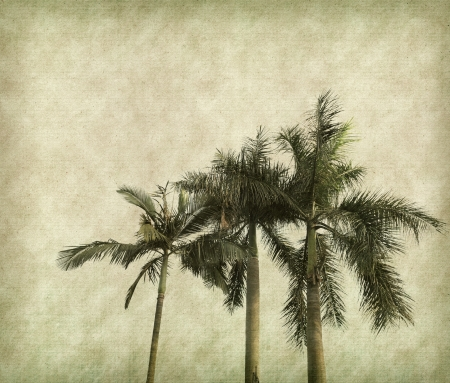 palm leaves on antique cracked paper texture photo