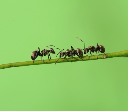 unity small flower: ant in nature