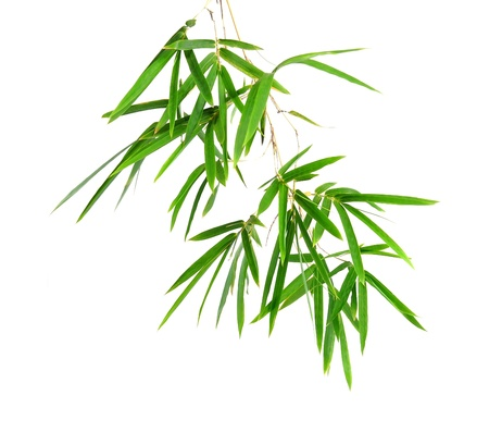 bamboo leaf: Bamboo leaves isolated on white background