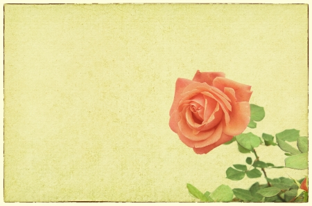 Roses design in grunge and retro style photo