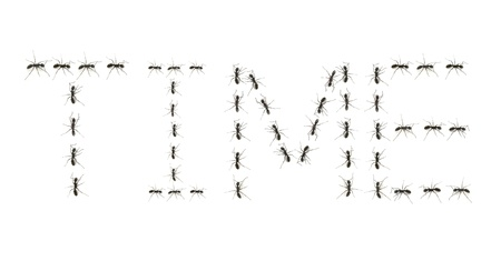 ants assembled to spell the word time photo