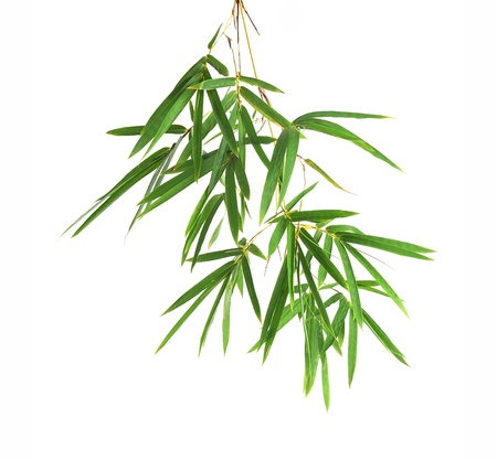 Bamboo leaves isolated on white background photo