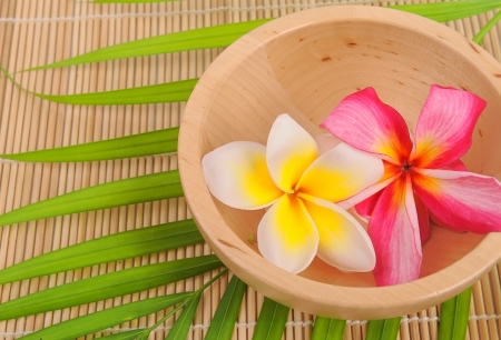 plumeria flowers closeup on green leaves with wood bowl photo