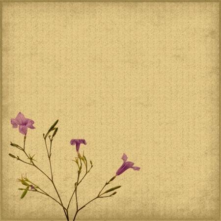 purple flower on Old antique vintage paper background photo