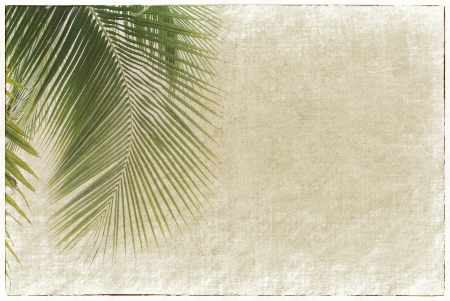 palm tree isolated: old paper background with palm leaf Stock Photo