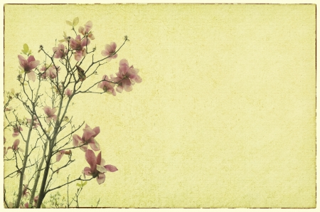 magnolia flower with Old antique vintage paper background Stock Photo - 14793589