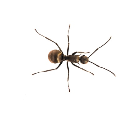 ant in nature photo