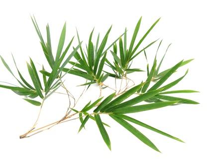 bamboo tree: bamboo leaves Stock Photo
