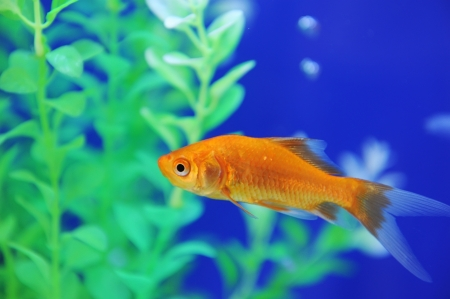 Tropical fish in an aquarium whit water on background photo