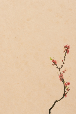 plum blossom on Old antique vintage paper background photo
