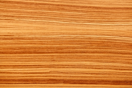 wood textures: tree wood textures