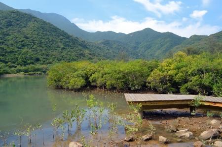 bridge in nature: wooden boardwalk in wetland forest