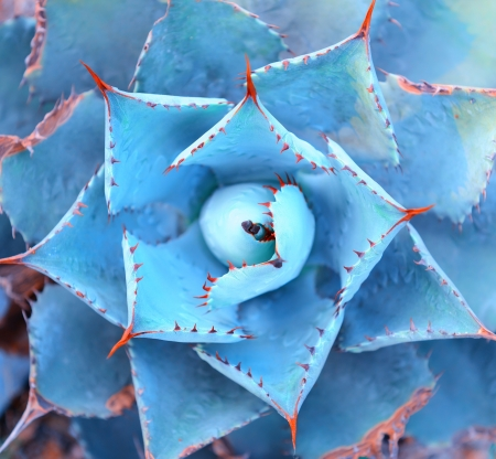 Macro of succulent plant in the desert Stock Photo