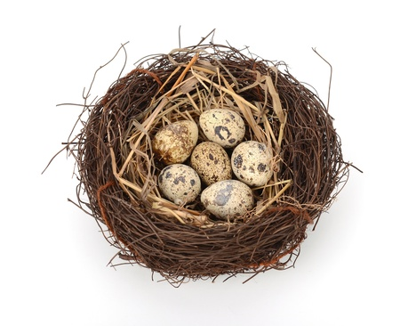 bird nest with eggs photo