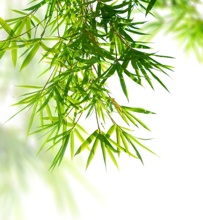 tranquil: bamboo leaves Stock Photo