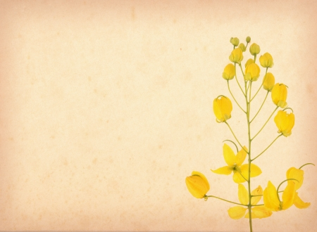yellow flower blossom on old antique vintage paper background photo