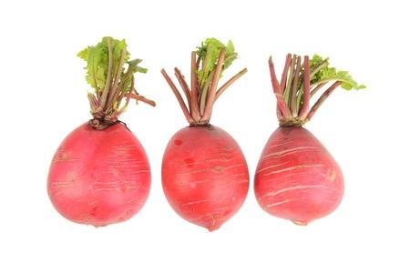 fascicle: red radish isolated on white background