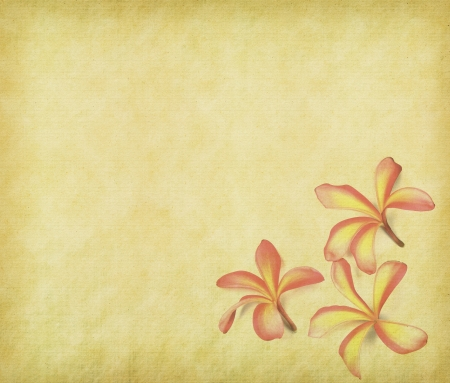 frangipani or plumeria tropical flower with old grunge antique paper texture photo