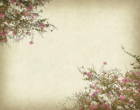 crepe myrtle flowers with old grunge antique paper texture photo
